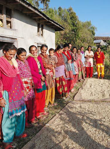les cultivatices du café au Népal